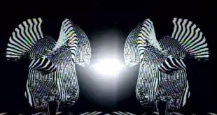 Thus Owls - Black Matter-clip