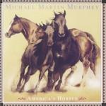 Michael Martin Murphy - America's Horses